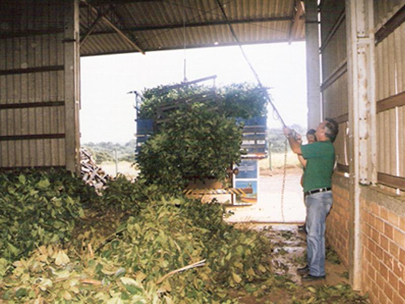 Verdelandia is the pioneer of vacuum herb processing in Paraná